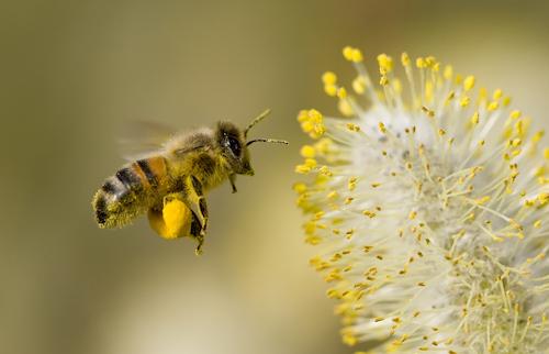 Pollen-analyse-Airsteril